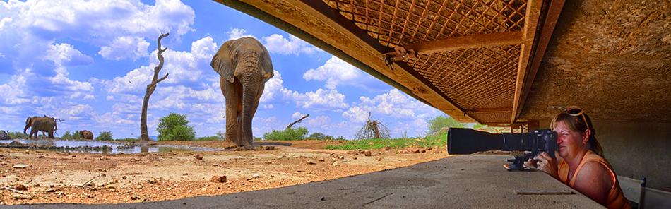 Madikwe Game Reserve Tanago Fotoreisen