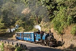 Tanago DHR Darjeeling